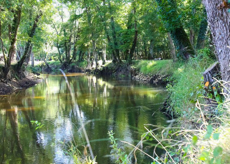 Destination Garonne, le Ciron