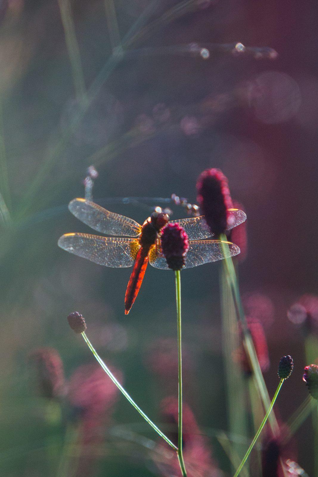 Jardin-Millesime—Credit-photo-Yann-Monel–4–2