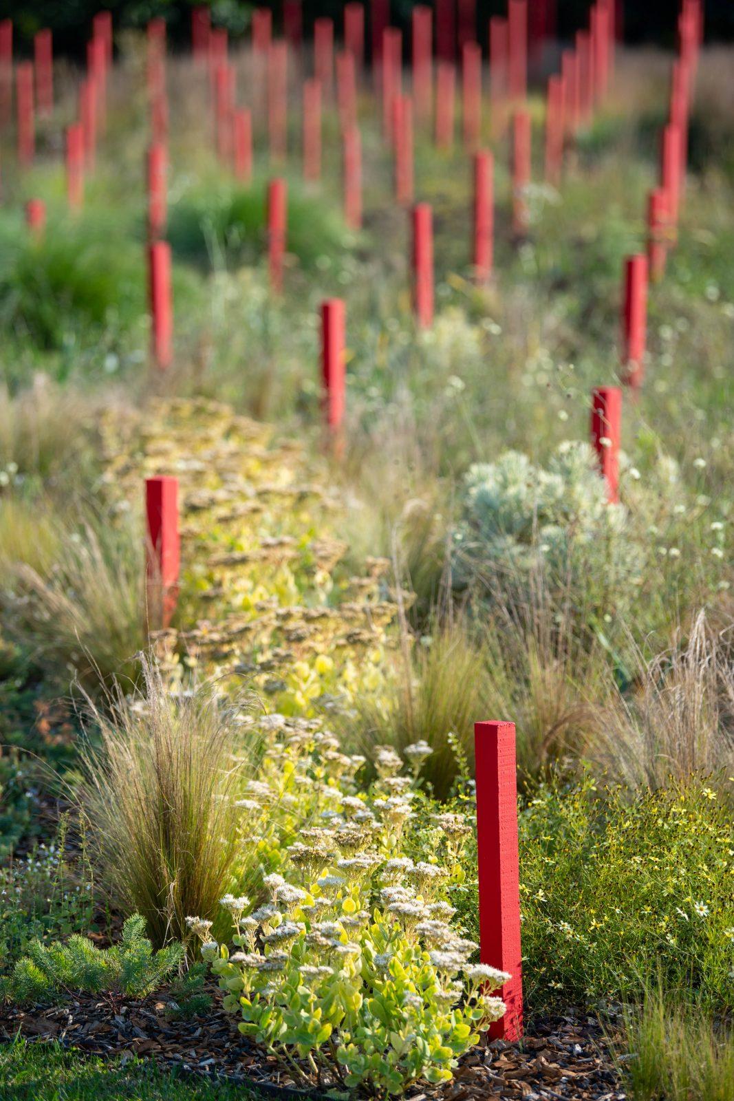 Jardin-Millesime-zoom—-Credit-photo-Regis-Hazenfus-2