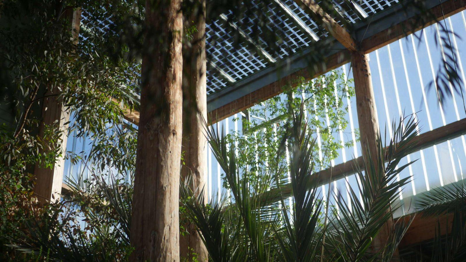 Jardin-botanique, les serres