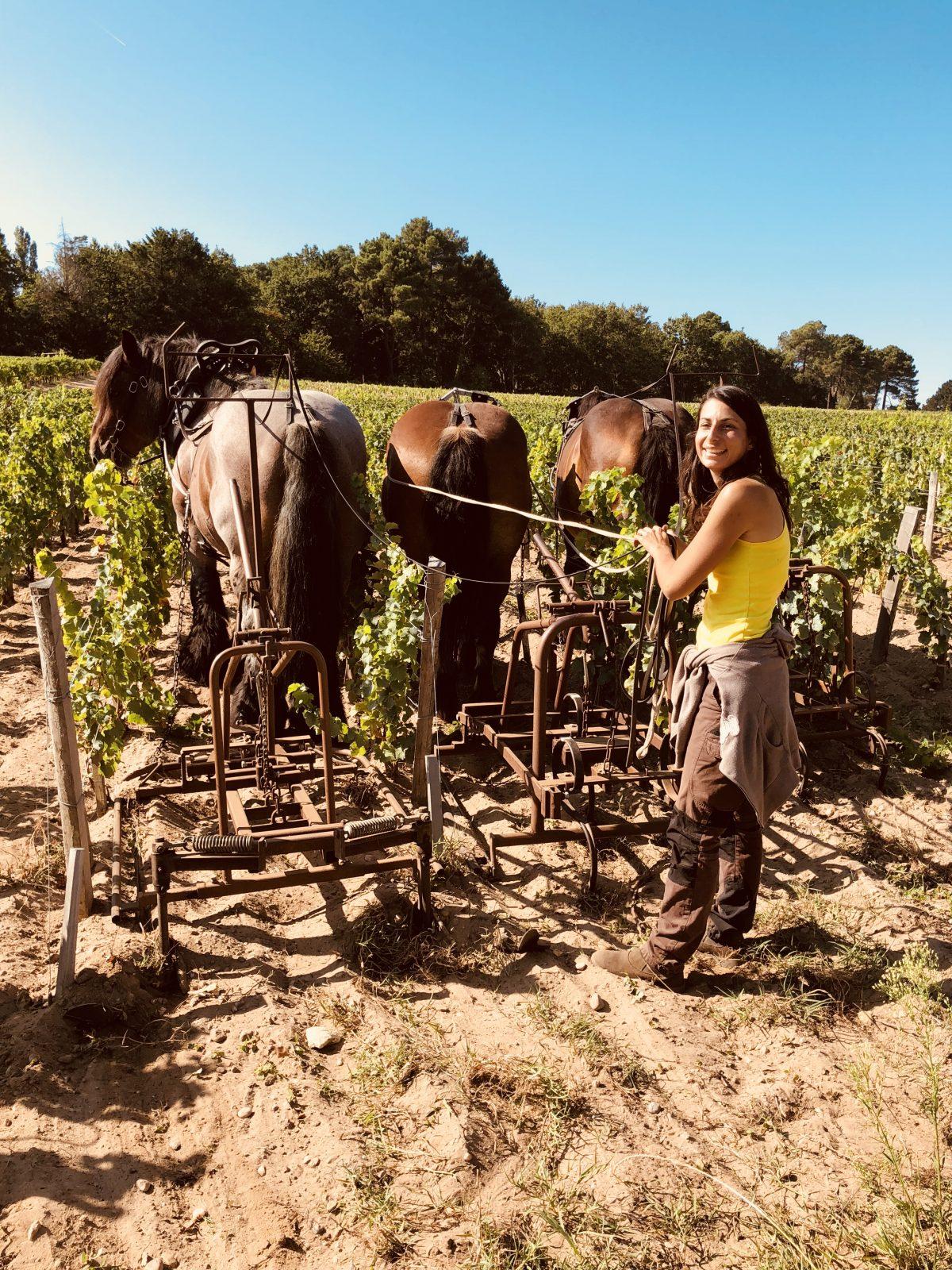 Julie-et-les-chevaux–Daniel-Cathiard-