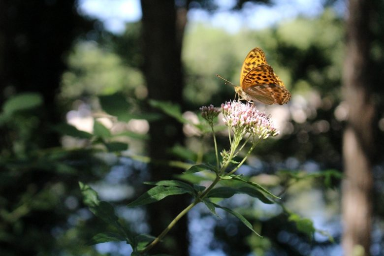 Lacs_Moulin_Blanc_st christoly de blaye papillon 800×600