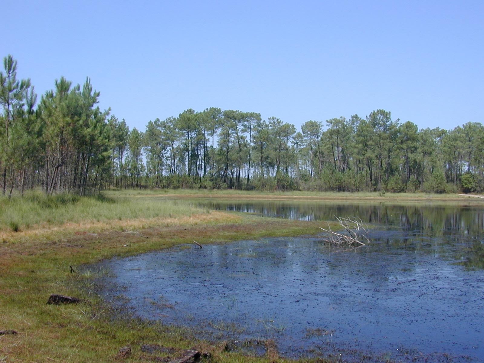 Lagune du Gât mort