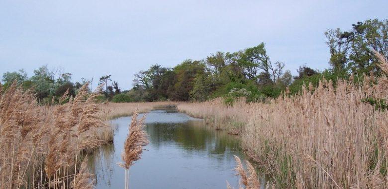 Le Verdon – Marais du Logit