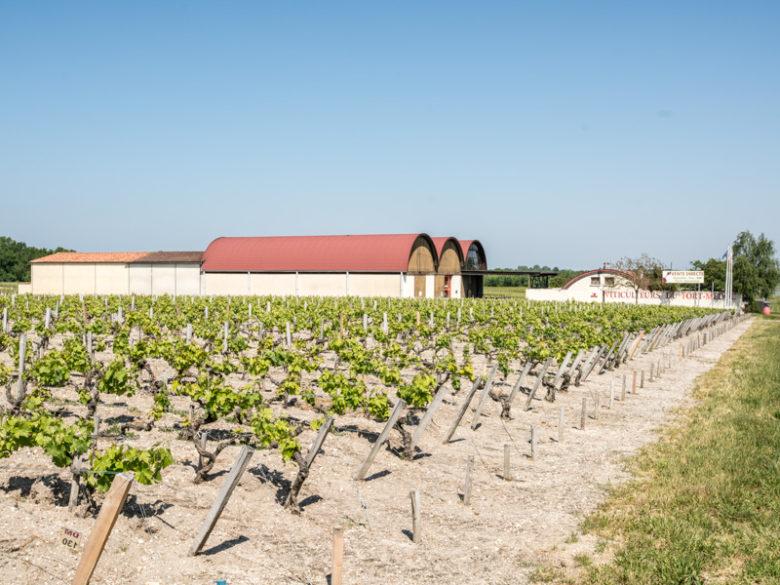 Les-viticulteurs-du-fort-Medoc
