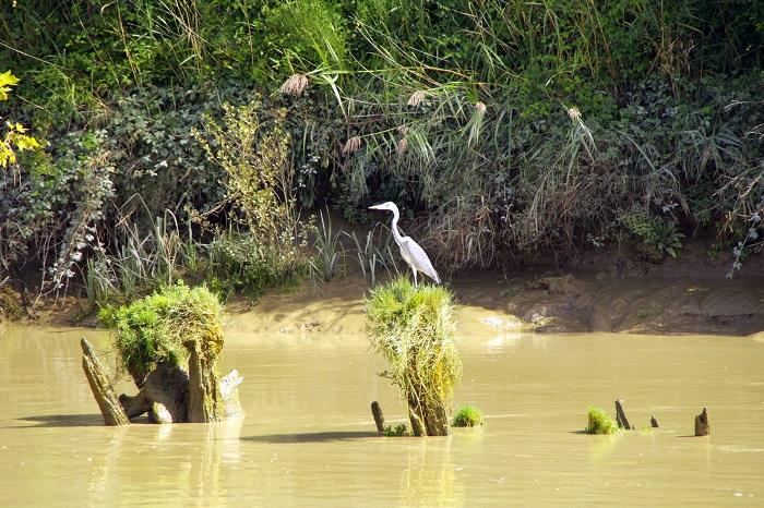 Libourne-Balade-fluviale-sur-la-Dordogne-Bateau-l-Hermine-CCordonatto-600X800-KAT9191-001