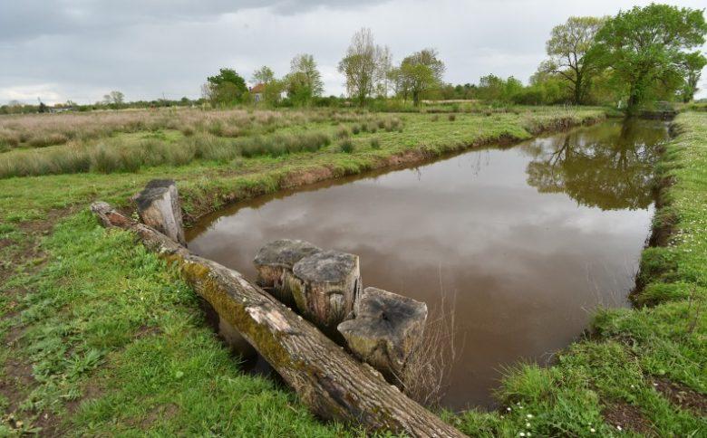 Marais de Montferrand (1)
