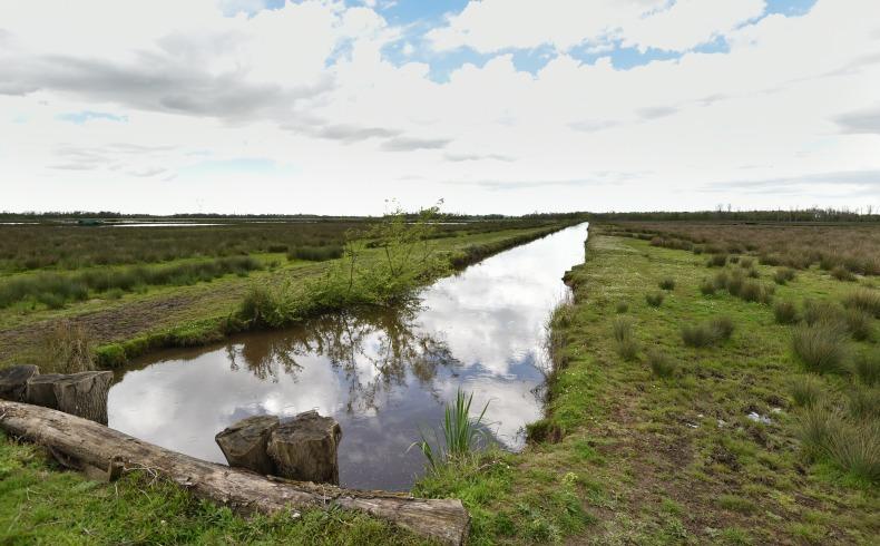 Marais de Montferrand (2)