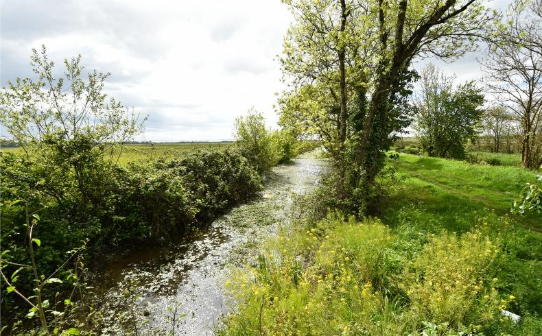 Marais de Montferrand (3)