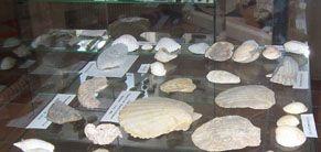 Musée de lignan 2