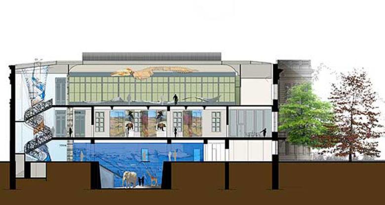 Museum-Histoire-Naturelle-Projet-w2