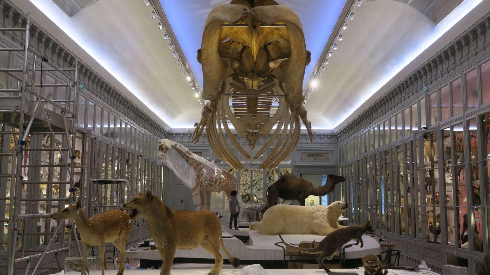 Muséum de Bordeaux