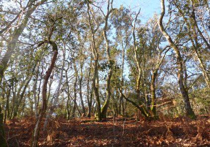 Le sentier des Chênes – Réserve Naturelle de Hourtin