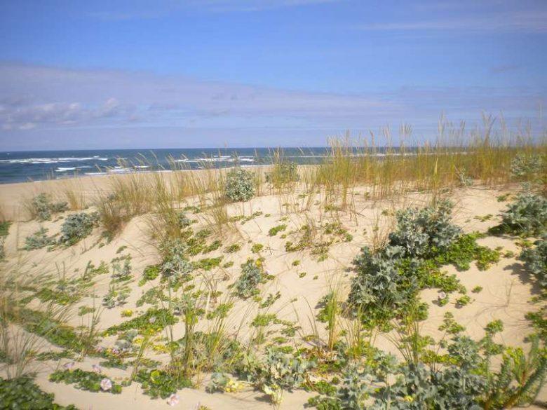 Paysage de la dune littorale