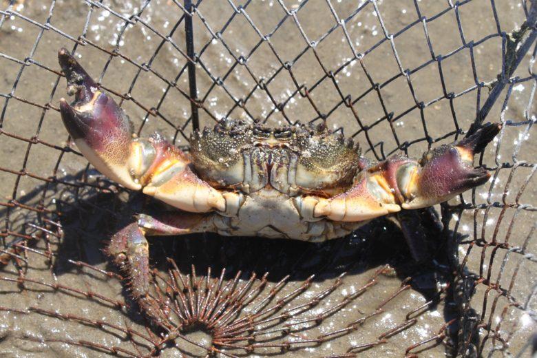 Peche-aux-crabes-4