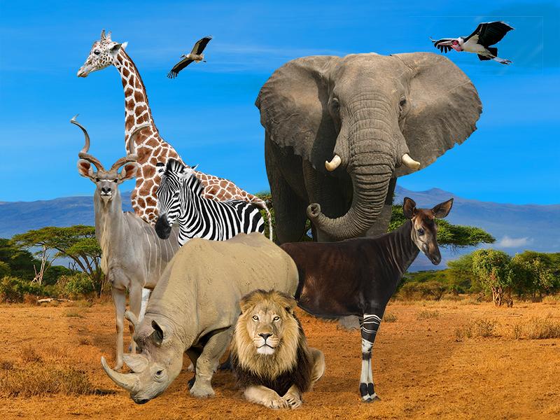 Photo-Zoo-du-Bassin-D–arcacho