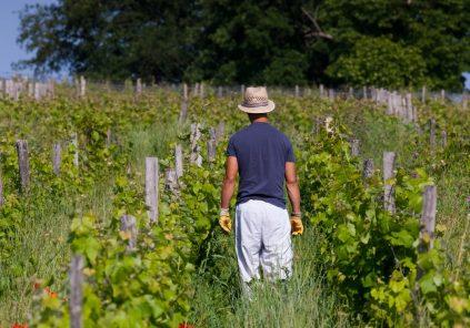 Randonnée dans le vignoble