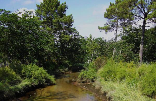 Ruisseau-du-cires-2