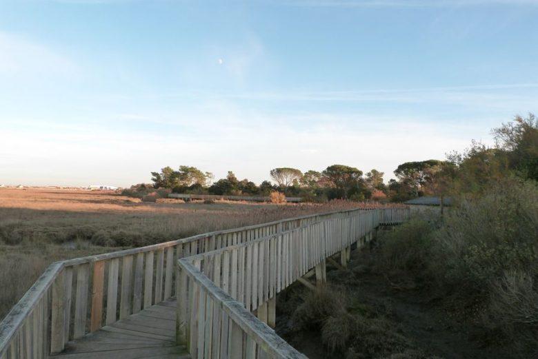 Le sentier du littoral de gujan mestras gujan mestras - Camping les jardins du littoral lacanau ...