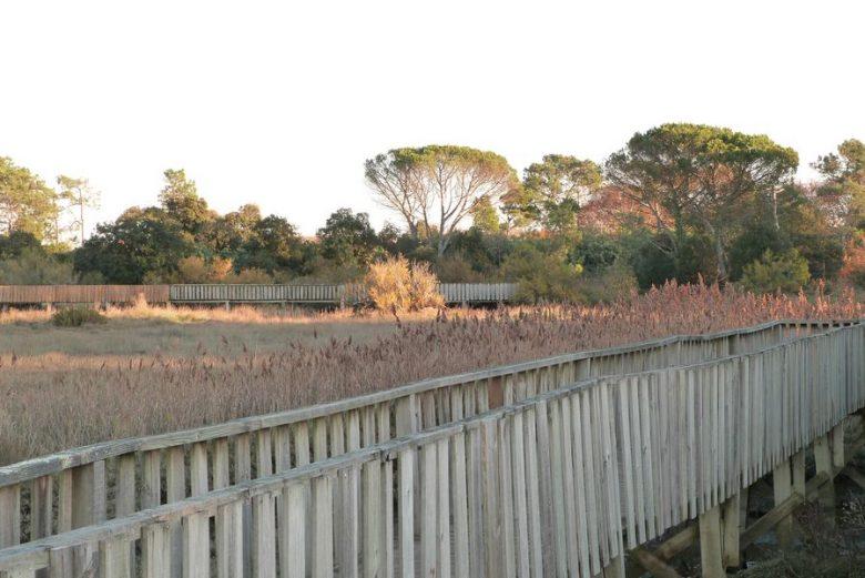 Sentier du littoral (22) [800×600]