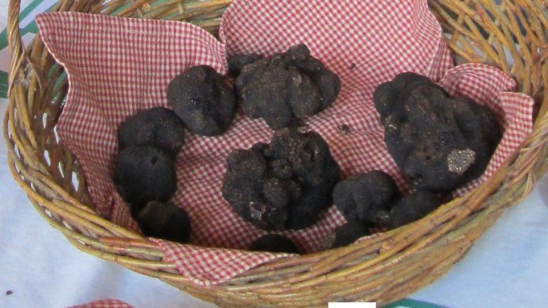 Sirtaqui – Vignobles Dorneau – truffes