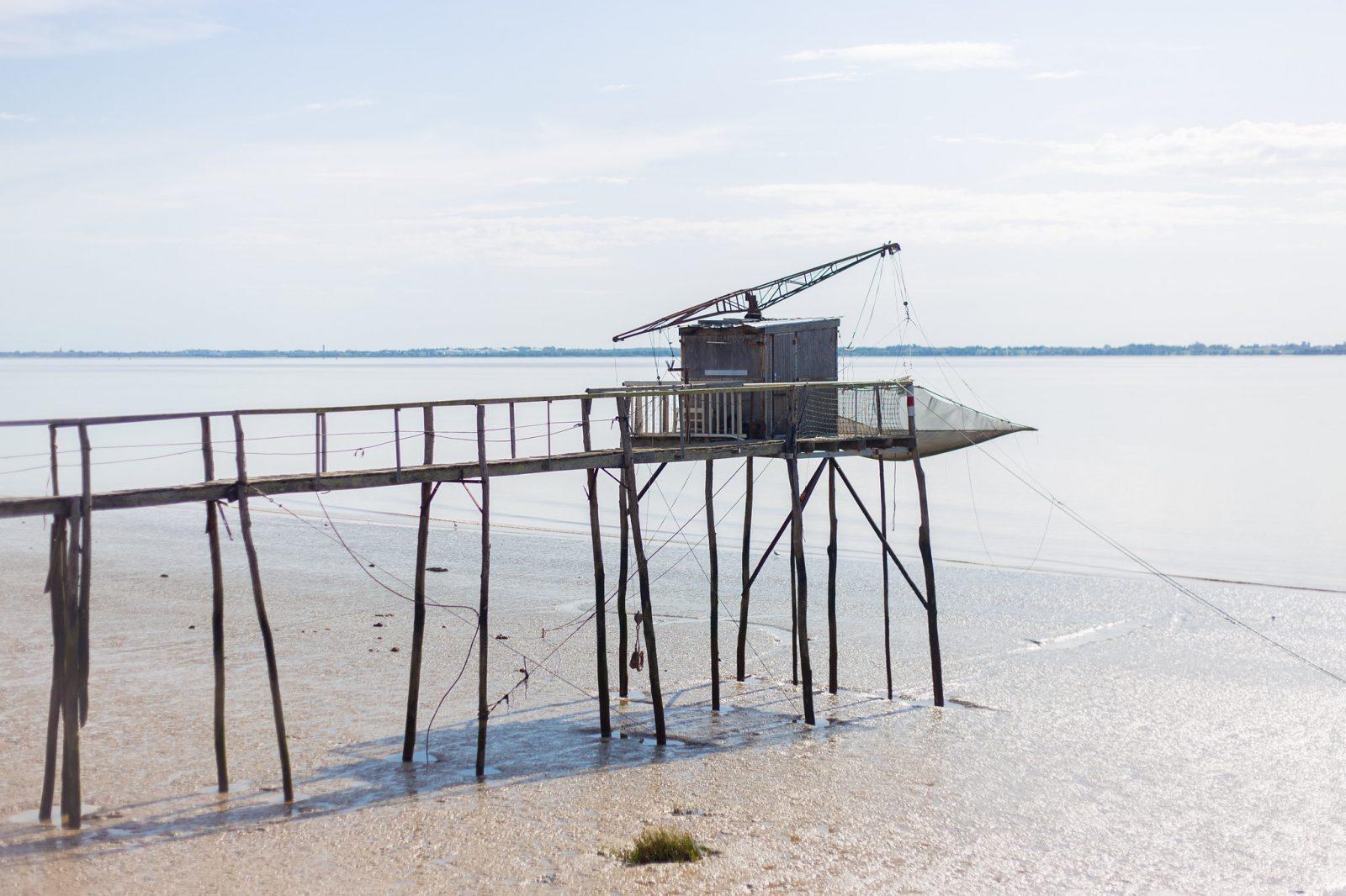 Terre d'oiseaux 1-® David Remazeilles (Gironde Tourisme)