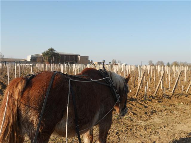 Travail du sol avec des chevaux de traie (Small)