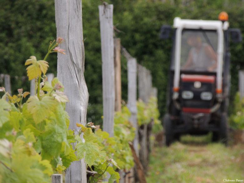 Vigne Vignobles Carles_12_reduc