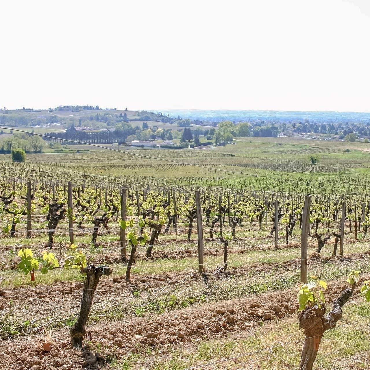 Vignes_St-Magne-de-Castillon