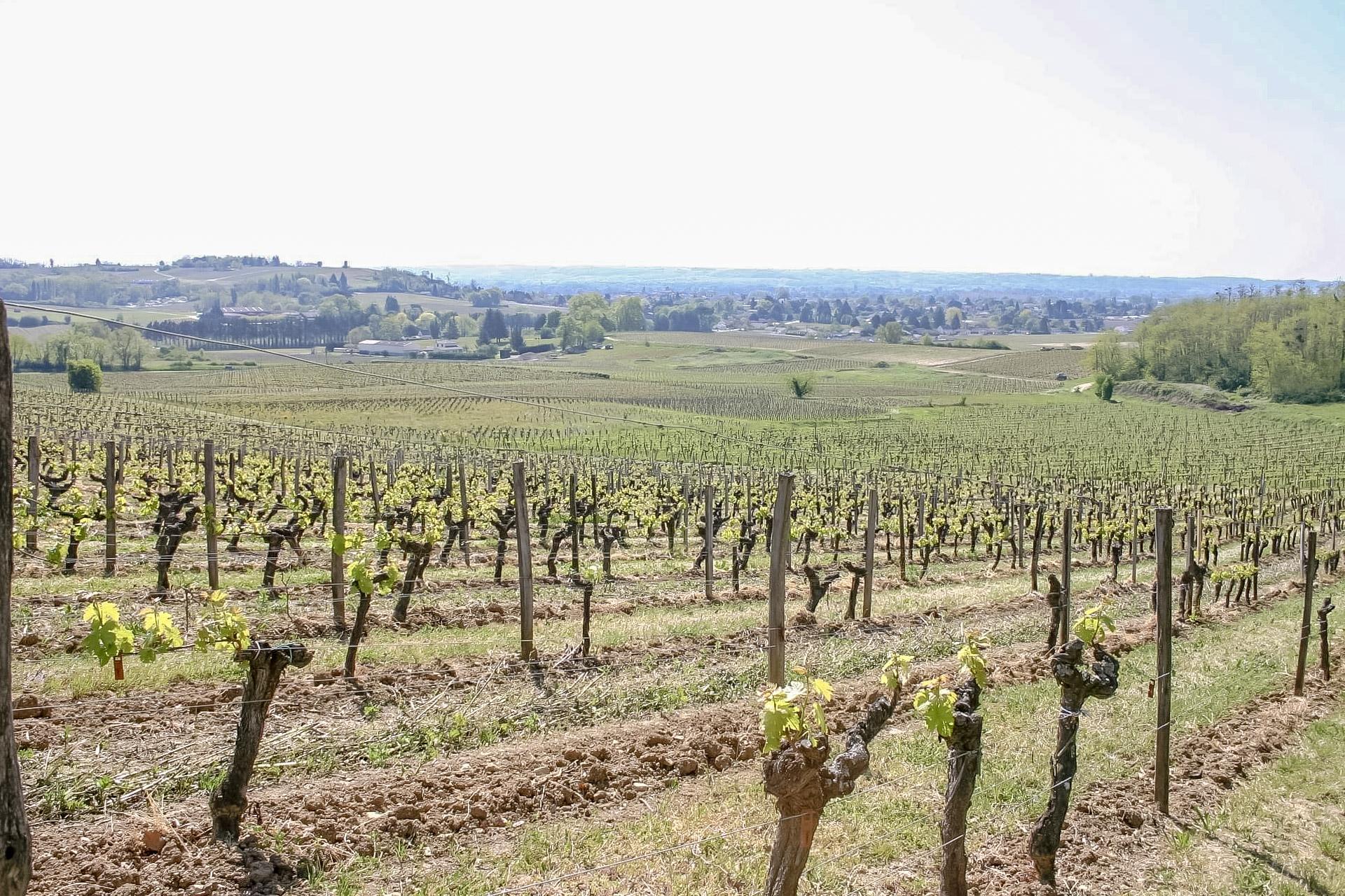 Vignes_paysage_St-Magne-de-Castillon_OTCP_M-Sauvanet_2021
