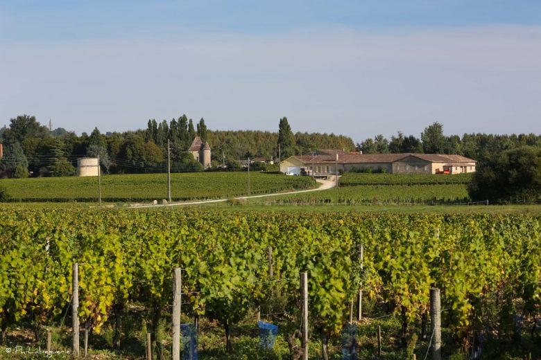 Vignoble Ch de Rolland (2)