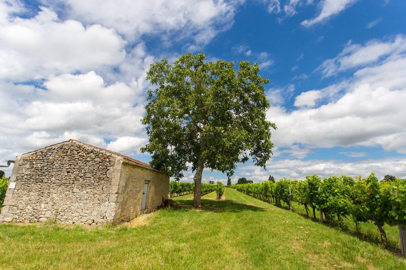 Vignobles E2M-II® David Remazeilles (Gironde Tourisme).jpg