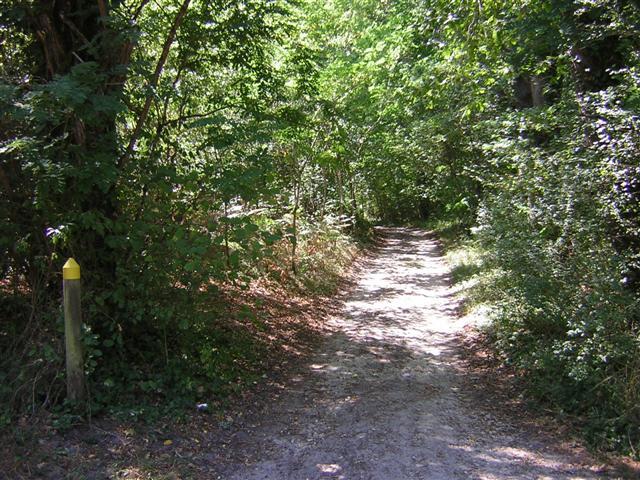 Vallée du Ciron