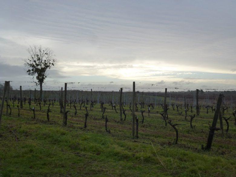 Vue sur les vignes vers Chez Guibert