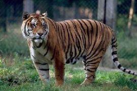 Zoo du Bassin d'Arcachon – La Teste