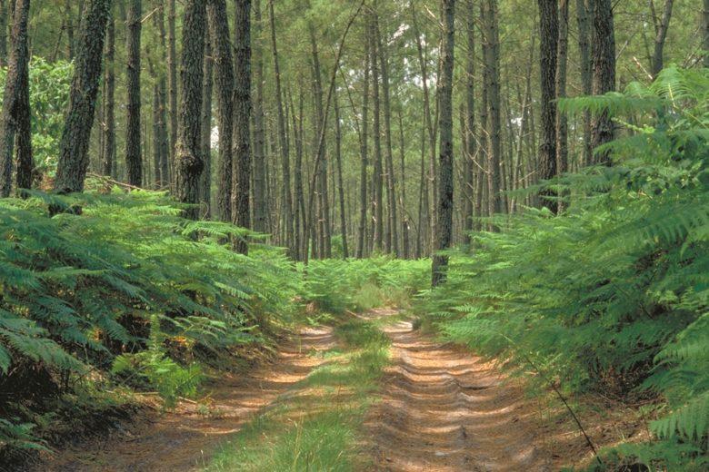 Chemin en SousBois Vert