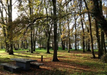 Parc de Beaudésert