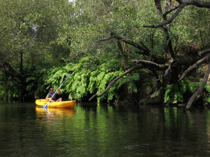 canoë – Amazone (7) redi