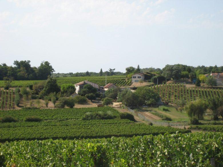 chateau de côts bayon sur gironde vignoble côtes de bourg 800×600