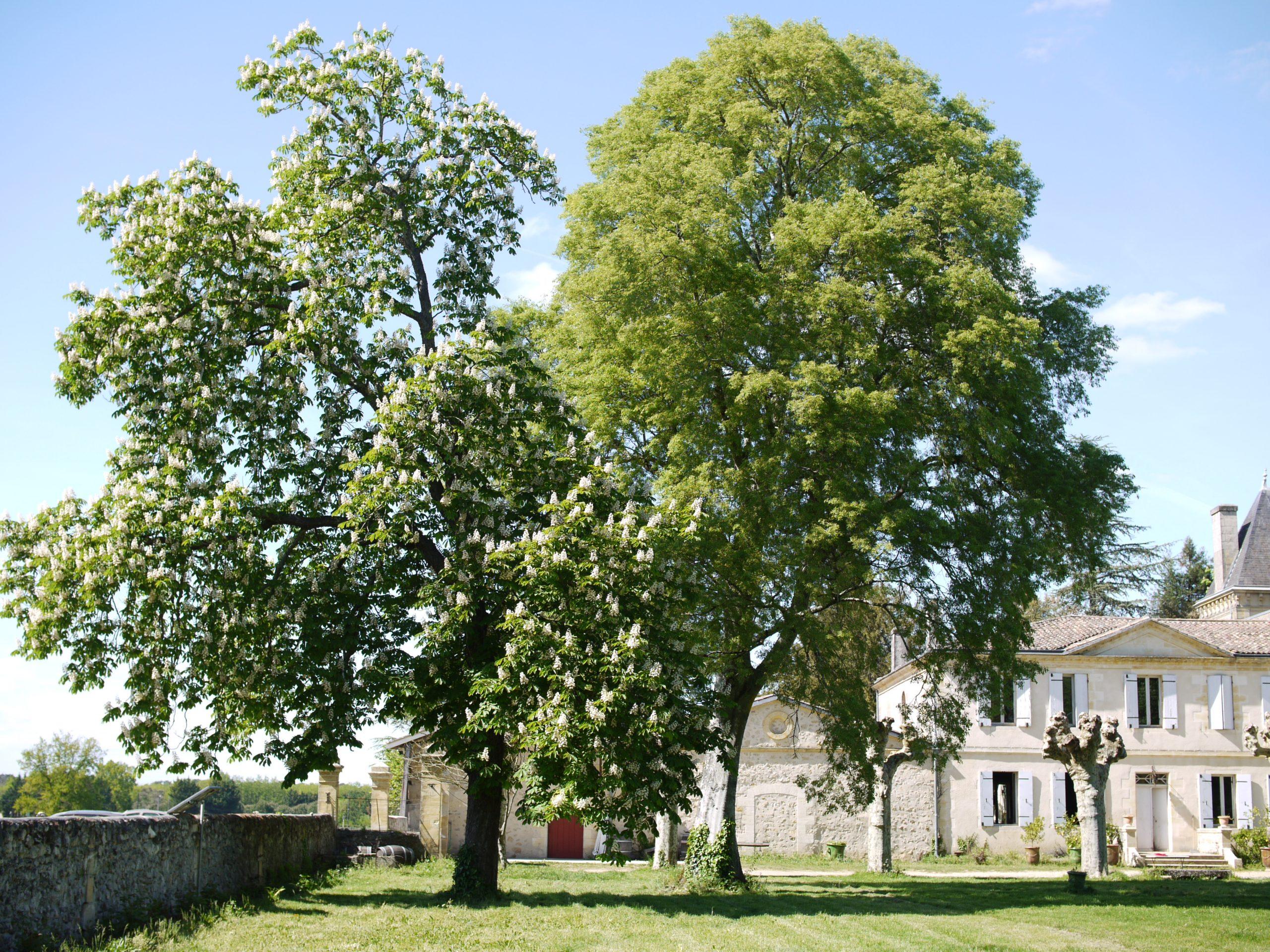 chateau_lusseau_P1090788