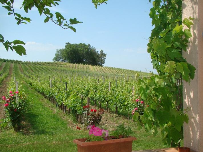 chateau-pinet-la-roquette-Blaye-cotes-Bordeaux-vigne-800×600