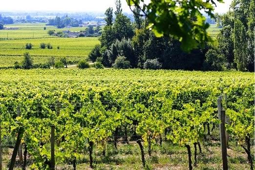 coutet Cote de franc vue Dordogne Domaine terroir 1