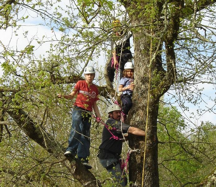 escalad-arbres-