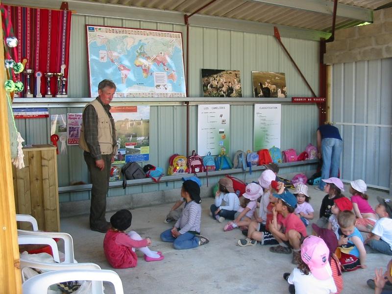 ferme-pedagogique-des-lamas-bienvenue-a-la-ferme-st-paul-de-blaye-groupe-800×600