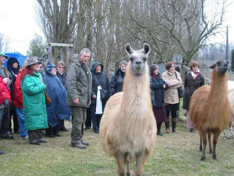 ferme-pedagogique-des-lamas-bienvenue-a-la-ferme-st-paul-de-blaye-groupe-hiver-800×600