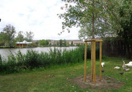 Balade à roulettes : Le parc des étangs