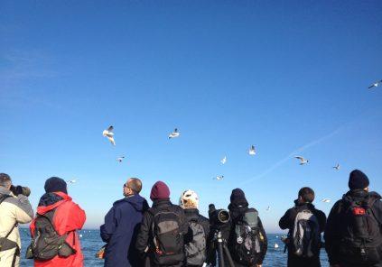 Week-end d'initiation à l'ornithologie : la migration et le début de l'hivernage