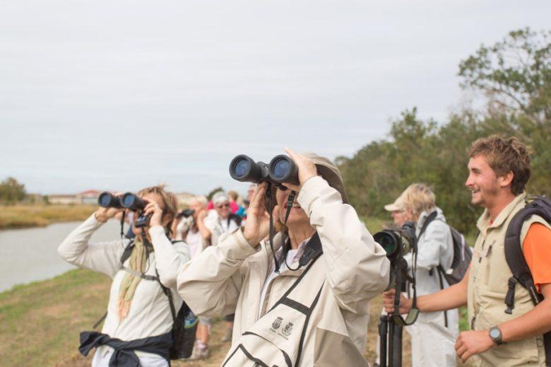 Visite Touristique de l'Ile Nouvelle (Estuaire de la Gironde) blaye 800×600