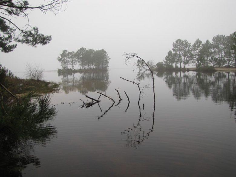 matinée brumeuse sur la rive est