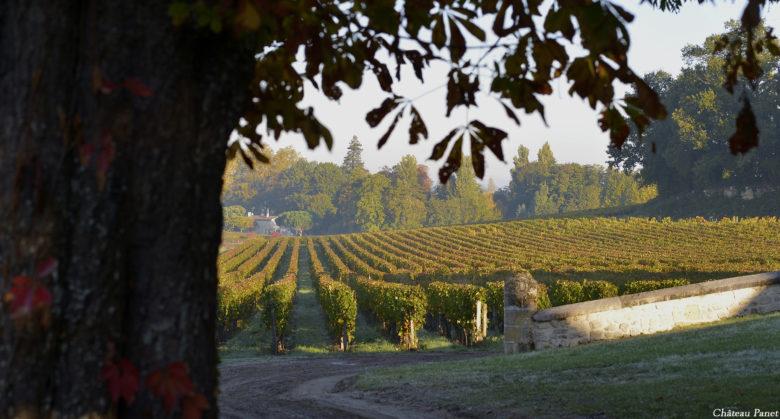 vignes automne 10_reduc